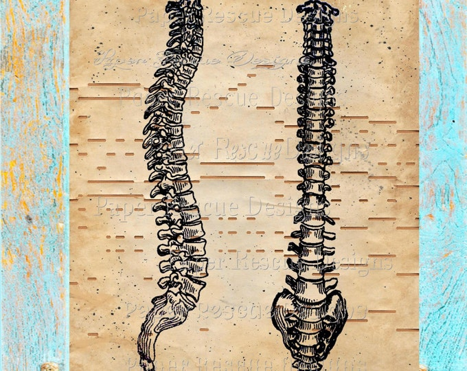 Player piano hand-painted paper beautifully upcycled to spine anatomy back dr art print decor original handmade antique paper print OOAK