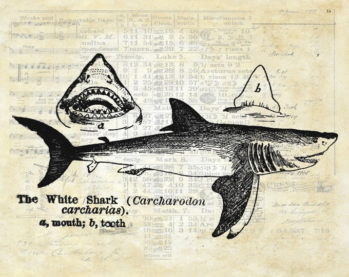 white shark from 1895 dictionary nautical art print choose your background WS293