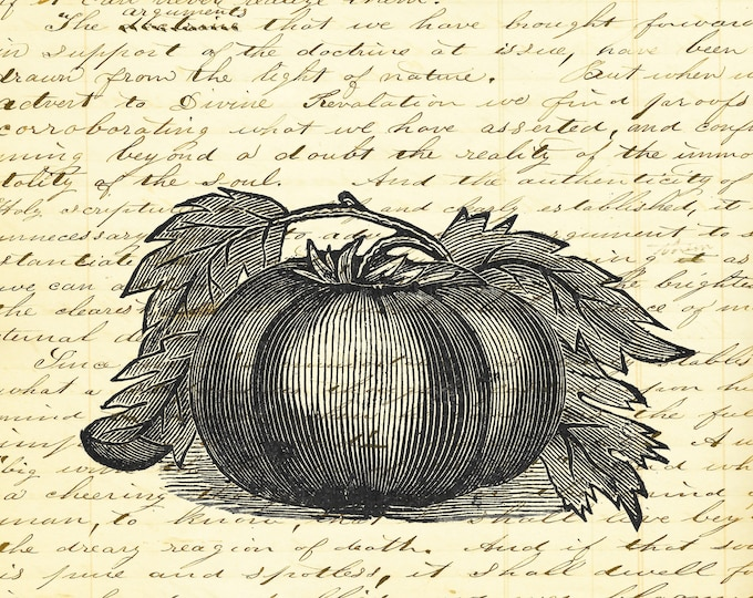 Tomato Kitchen art print custom choice background antique vintage page beautiful gift decor ON392