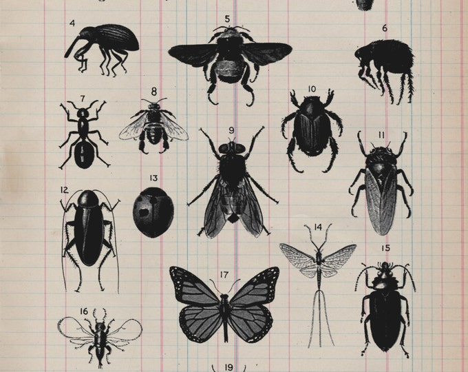 Insect Study on Antique Ledger Paper from 19th Century decor science entomology bugs gift art print wall farmhouse rustic 1800s VP0335