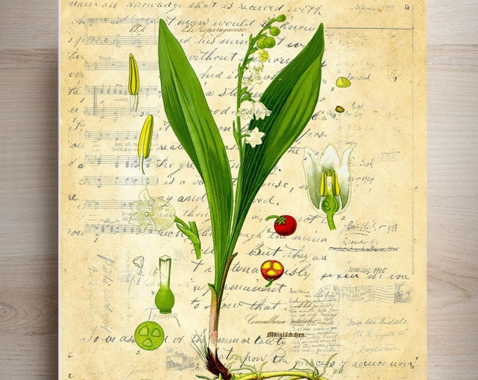 Mothers Day Botanical Print Lily of Valley choice of background antique vintage collage paper print beautiful wall FARMHOUSE DECOR MDB1394