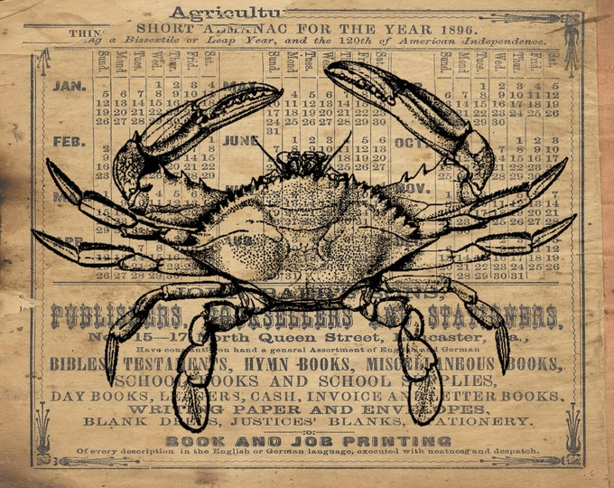 Blue Crab nautical beach art print BCP8372