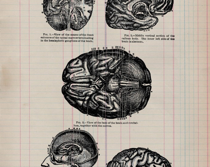 Brain Study on Antique Ledger Paper from 1800's medical doctor anatomy gift VP3221