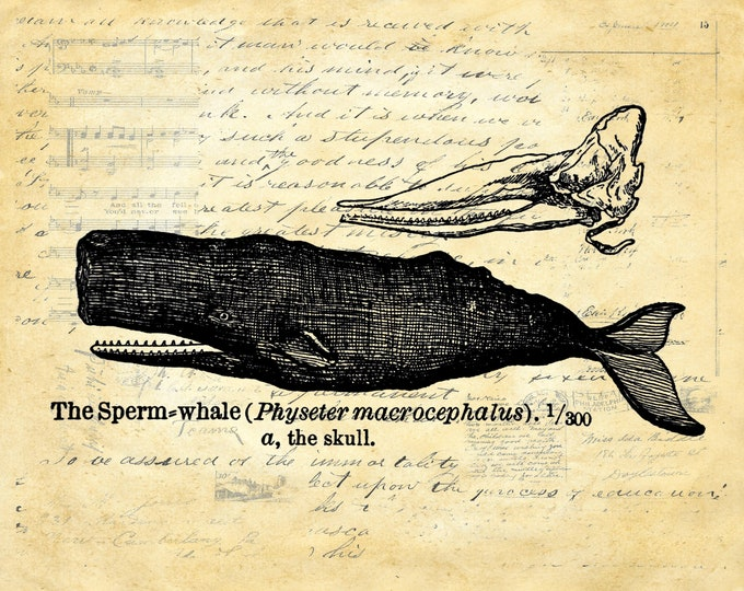 Vintage Whale Print on choice of background for nautical beach decor WH476