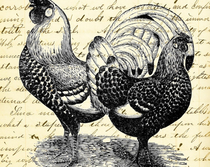 Chicken Rooster art print CRF3008