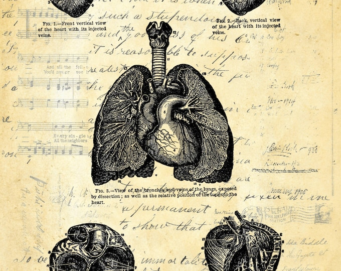 Heart Study vintage medical image doctor gift art print HS100
