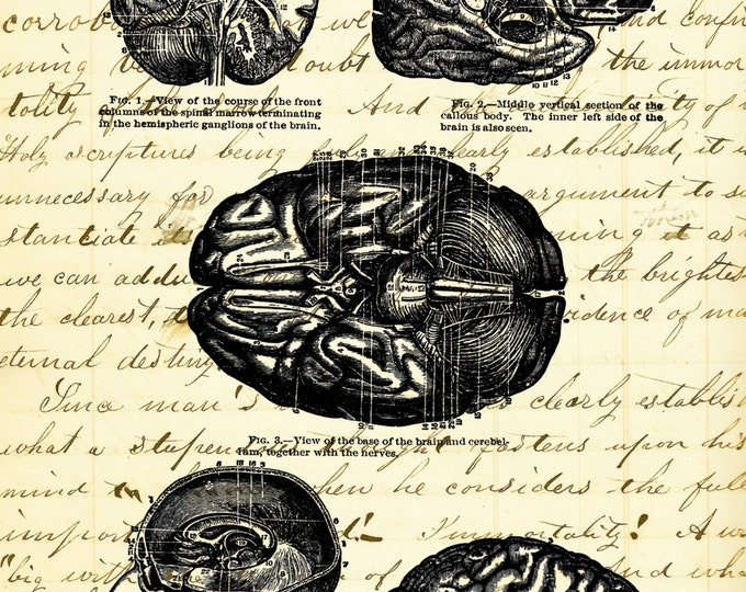 BRAIN Study vintage medical image doctor teacher gift art print BS1000