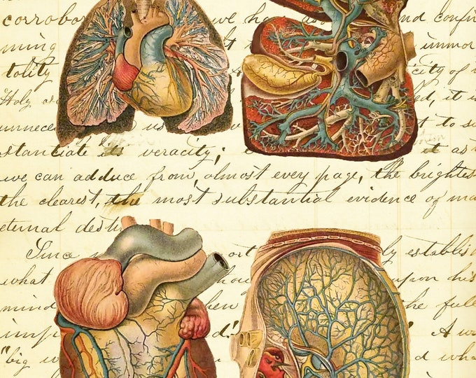 Heart Kidney Liver Lung study vintage art print doctor gift medical school gift poster DR938