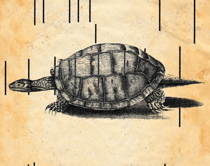 Antique Player Piano Paper upcycled vintage turtle print  FARMHOUSE DECOR animals antique paper art print handmade TURV90765
