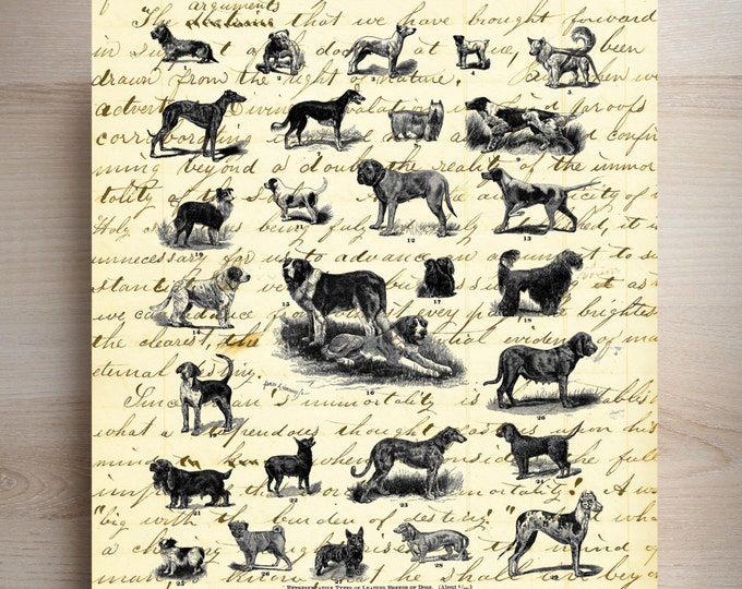 Dogs study vintage art print DSP3674