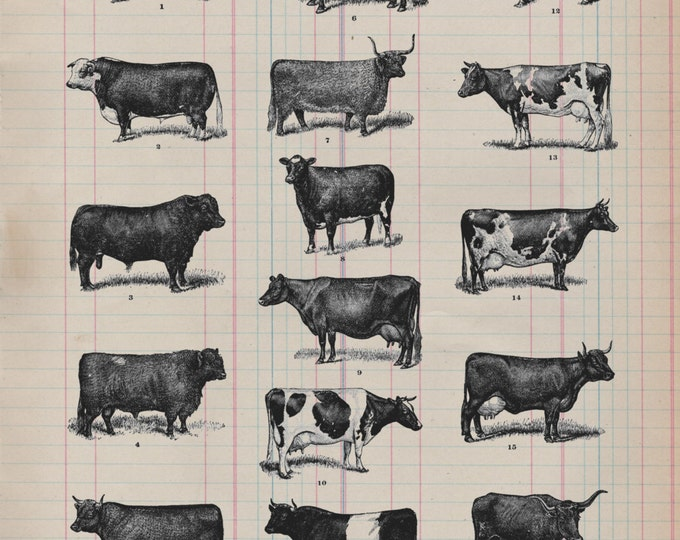 Real Antique Paper Print Cow Study from 19th Century decor cows barn farm art print wall farmhouse rustic 1800s VP09745