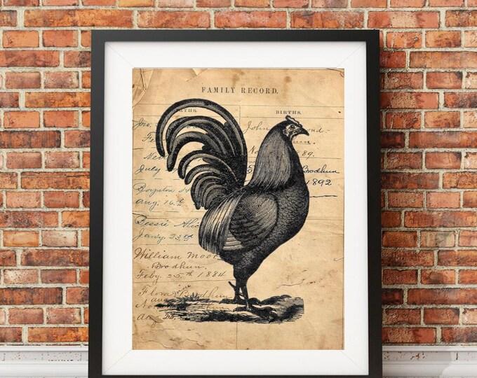 Vintage chicken fowl farm bird FARMHOUSE art print CHI038