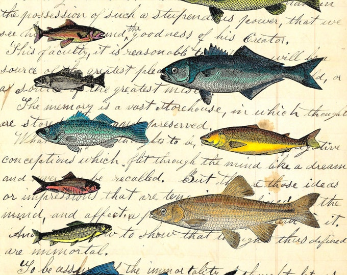 Vintage fish catalog sheet art print VFC0398