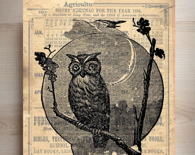 Vintage Owl image art print  0P20398