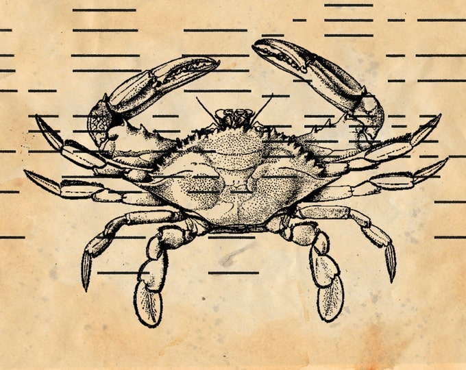 Antique Player Piano Paper upcycled crab print on antique hand painted vintage paper art print home decor handmade APP1234