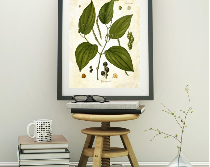 Botanical Black Pepper print | vintage botanical art print |choice of background vintage paper |  BPBP8456