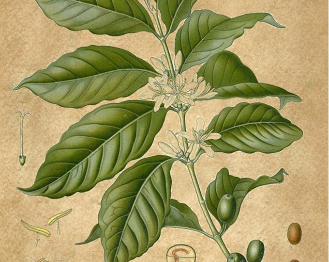 Wholesale Botanical Print 10 print listing pick your background for the prints  WHOLS403