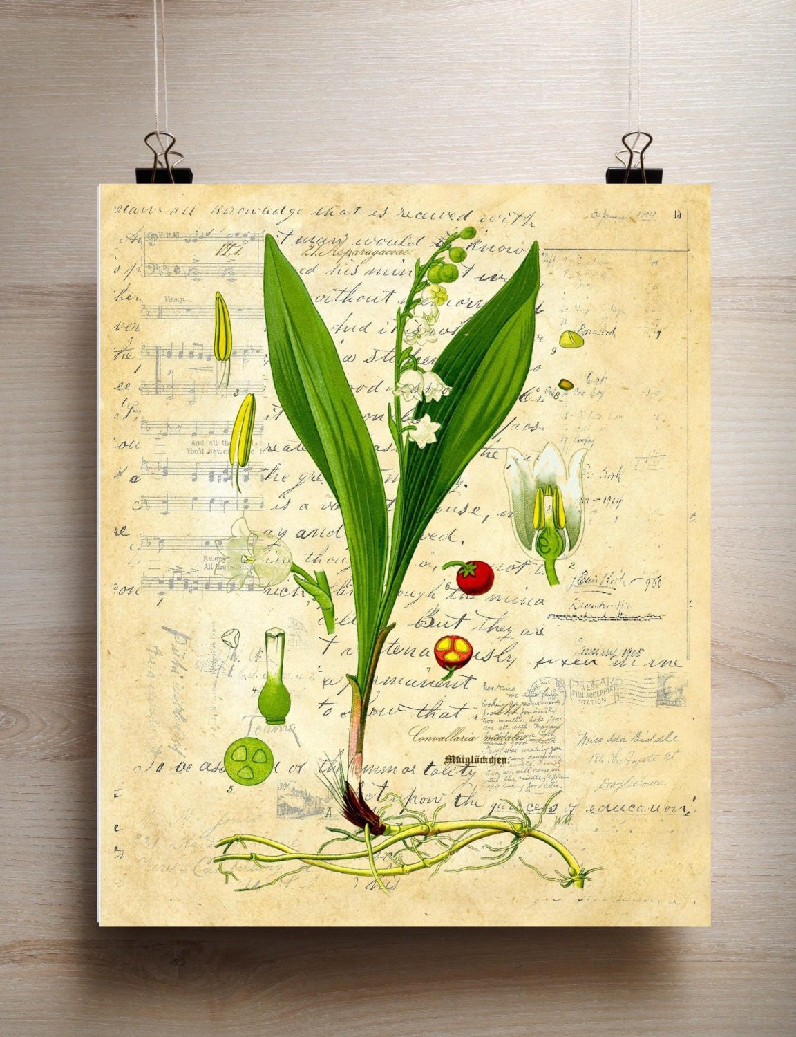 Mothers Day Botanical Print Lily of Valley choice of background ...