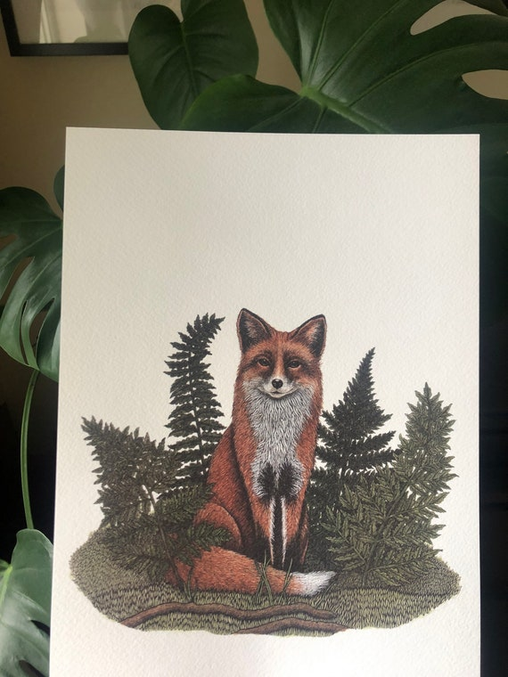 Fox & Ferns A4 print - Woodland Animal - Vixen - Foxes - British Wildlife Illustration - Watercolour - Pen and Ink - Gift for Animal Lover