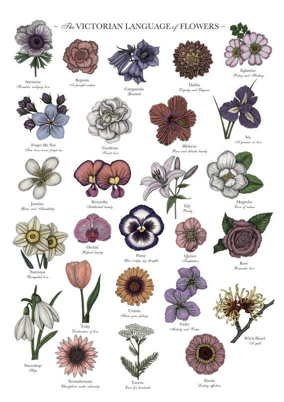 Victorian Language of Flowers Colour Print - A to Z of Flowers - Flower Alphabet - Floriography - Floral Print - Victorian Flower Meanings