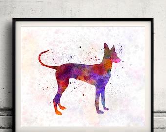Cirneco dell Etna 01 in watercolor - Fine Art Print Poster Decor Home Watercolor Illustration Dog - SKU 1491