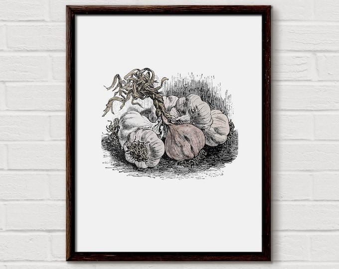Garlic Print. Garlic,  Food Print, Garlic Art, Botanical Print, Vegetable Print,  Watercolor Print, Vintage Botanical, Vintage Printable