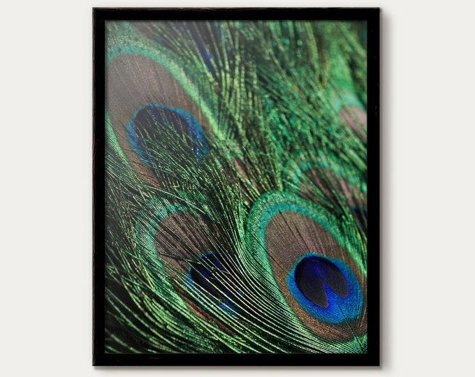 Peacock Decor, Peacock Wall Art, Peacock Feathers, Peacock artwork, Fine Art Photography, Peacock Art Print, Peacock Decor Blue Feather Wall