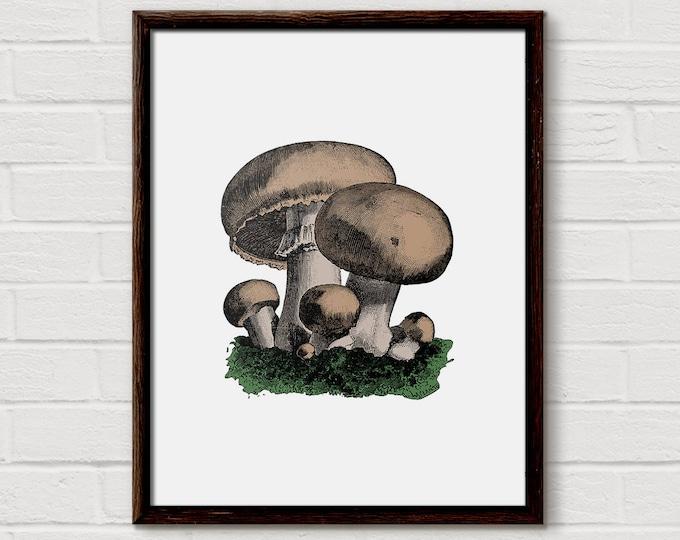 Mushroom, Mushrooms, Mushroom Print, Printable Mushroom, Vintage Mushrooms, Mushroom Decor, Mushroom Wall Art, Botanical Prints, Fine Art