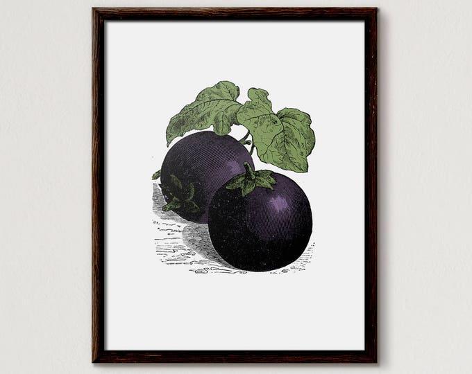 Aubergine, vegetable print, kitchen print, vegetables print, vegetable art, vegetable prints, vegetable wall art, food print, Eggplant Print