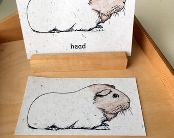 Guinea Pig 3-Part Nomenclature Matching Cards Printed on Banana Paper Card Stock
