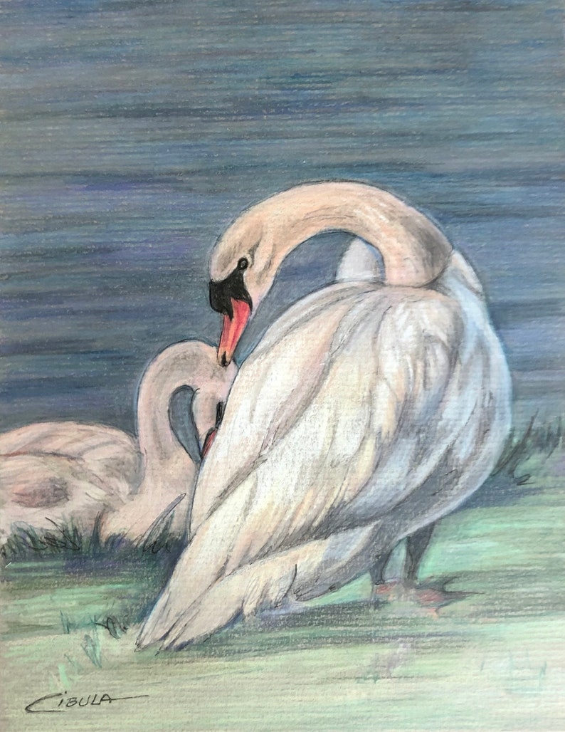 Original Wikdlife Bird Drawing of a Swan and her young
