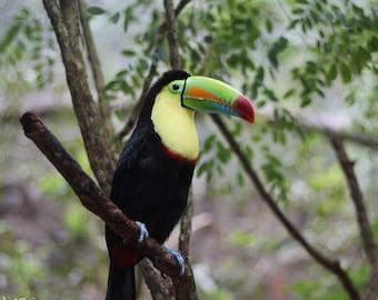 Toucan Photograph - Wildlife Photography - Bird Gift Idea - Nature Photography - Wildlife Lover Gift - Toucan Print - Animal Photography