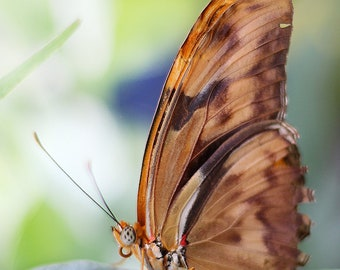 Butterfly Photography / Brown Butterfly / Mother's Day Photo / Fine Art Photography / Nature Photography / Butterfly Print