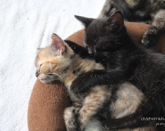 Kittens Hugging / Cat Lover Gift / Kittens Cuddling / Cute Kitten Picture / Baby Animal Print / Nursery Art / Pet Photography