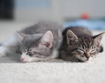 Best Friends / Cat Lover Gift / Kittens Cuddling / Cute Kitten Picture / Baby Animal Print / Nursery Art / Pet Photography