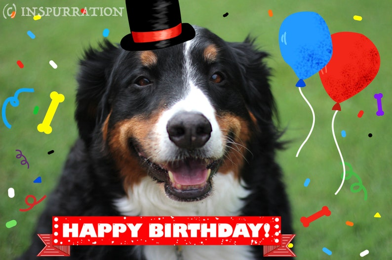 Dog E Cards Happy Birthday Digital Greeting Card