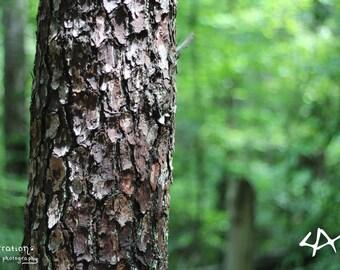 Tree Closeup - Green Wall Art - Nature Photography - Forest Art - Green Landscape - Forest Prints