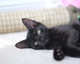 Black Cat Portrait / Black Cat Lover / Pet Photography / Black Kitten Picture / Baby Animal Print / Nursery Art / Gift for Cat Lovers