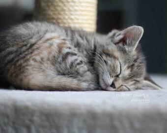 sleeping cat photo / cute kitten photo / cat photography / baby animal print / nursery art / sleepy kitten photo print