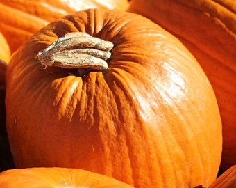 Pumpkin Photo / Autumn Photography / Fall Art / Orange Wall Decor / Pumpkin Patch / Halloween Art / Thanksgiving Art