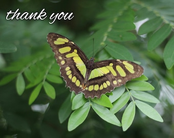 Butterfly Greeting Cards - Thank You Cards - Nature Cards - Blank Greeting Cards - Handmade Cards - Greeting Card Set - Nature Inspired