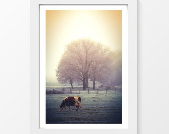 "Graze / Cow grass field tree mist frost winter photo printable art wall art home decor downloadable art to print yourself / A3 and 11"" x 17"""