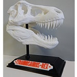 Dinosaur T, Rex Skull with Base & Nametag, High Quality, Great for kids and adults, 3D Printed, Christmas Gift