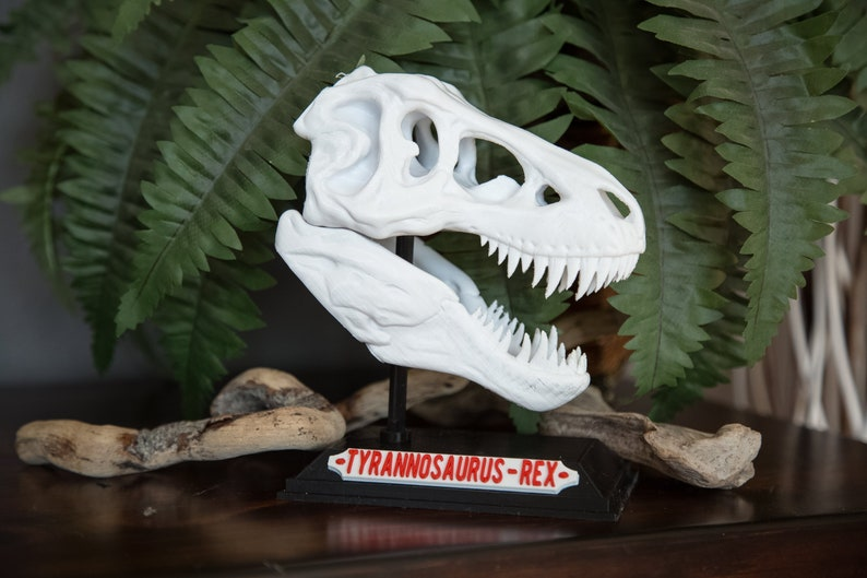 Dinosaur T Rex Skull with Base & Nametag High Quality Great image 0