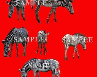 Zebra Overlays 6 PNG Files