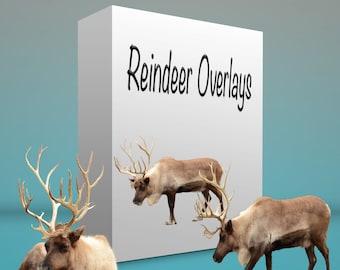 Reindeer Overlays