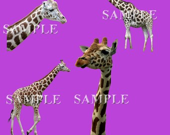 Giraffe Overlays PNG Files