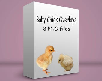 8 chick overlays PNG files