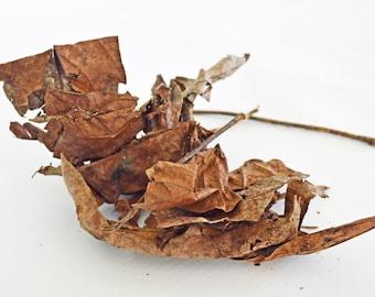 Leaf Litter - Hermit Crab Food - Organic - Hermit Crab - Pet Food