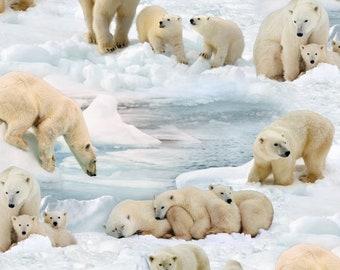 5d331d47d1c Polar Bear Fabric   Polar Bears on Ice   Elizabeth s Studios 489   Polar  Bears by the yard Fabric   Polar Bear Yardage   Cow Fat Quarters